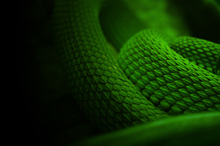 coiled snakes in the dark